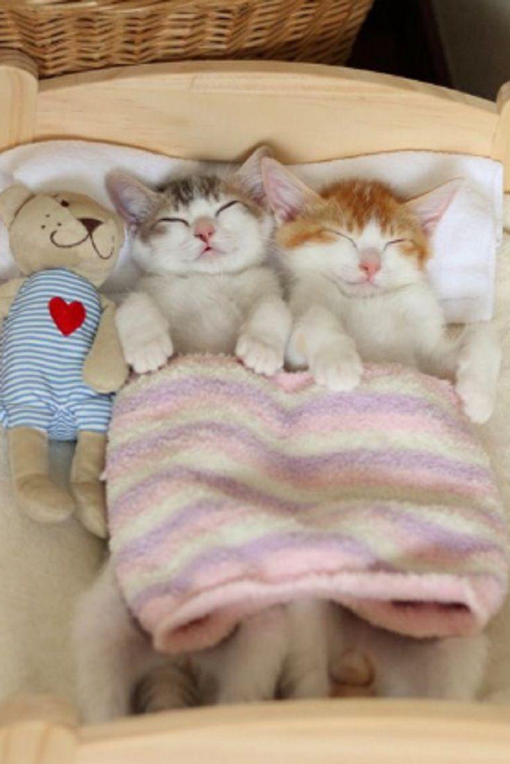 Картинка спокойной ночи с котиками