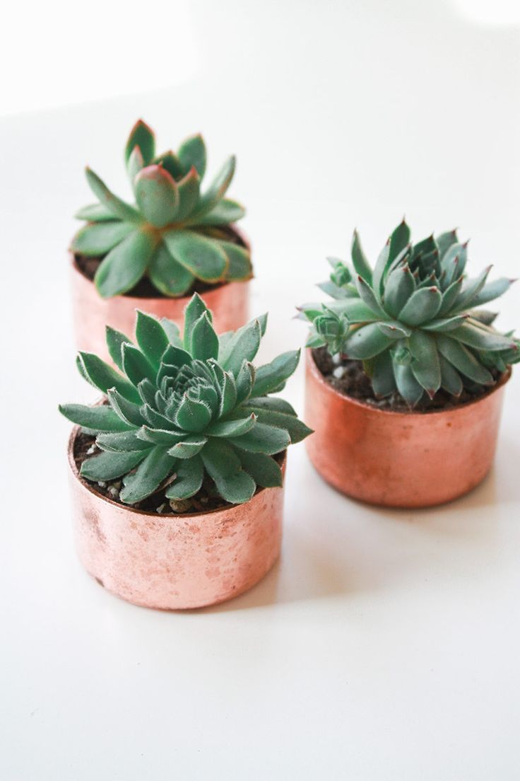 You can never have enough succulents. Copper Planter // Julia Kostreva