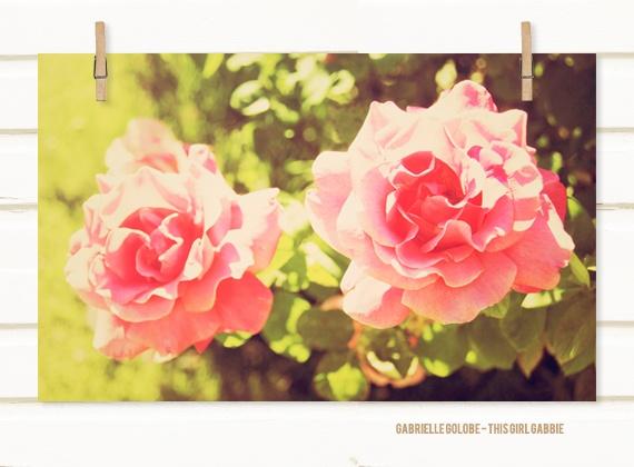 Little Roses Fine Art Photograph - 8x12 Print - Storenvy: Rose Fine