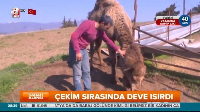 A camel attacked an unwitting farmer on live television in Turkey