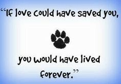 Painting this saying with a photo of my beloved dog, in memorial