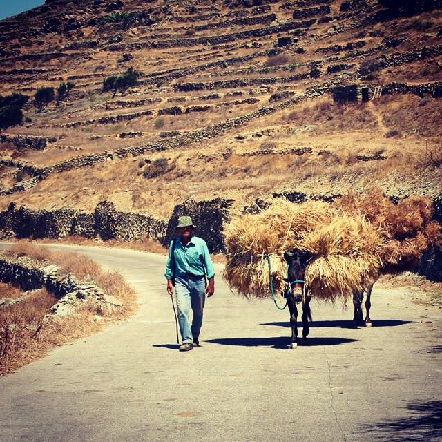 #Folegandros island #Greece #Donkeys on the road! Photo credits:  @ah.utopia
