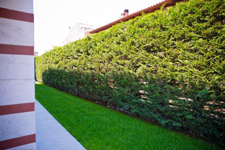 Garden in Hotel Melissanthi