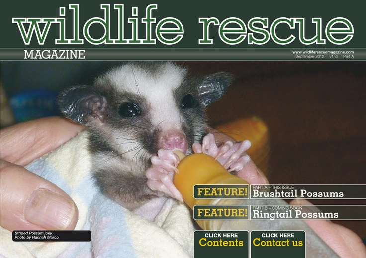 Issue 5A - Brushtail-Possum-Wildlife. http://wildliferescuemagazine.com/issue-five.html