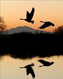 """""""Whoever you are, no matter how lonely, the world offers itself to your imagination, calls to you like the wild geese,  harsh and exciting — over and over announcing your place in the family of things."""" Mary Oliver"""