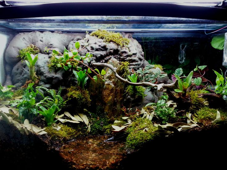 10 Gallon Dart Frog Vivarium | www.imgkid.com - The Image ... 10 Gallon Dart Frog Vivarium