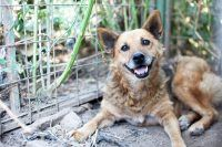 Kotia etsivä koira: BETA - Rescueyhdistys Kulkurit ry - Matkalla kotiin! - Kulkurit.fi