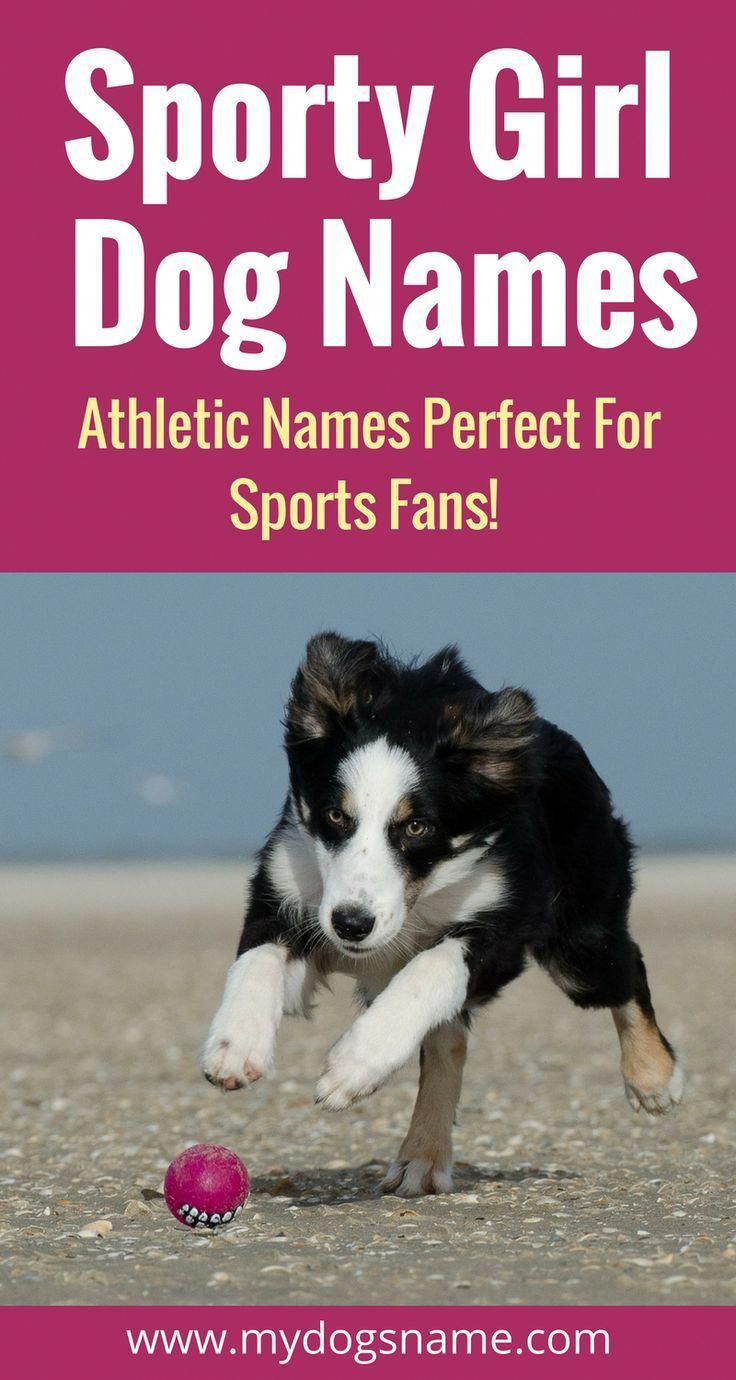 If You Re A Sports Fan These Sporty Dog Names Are Perfect For