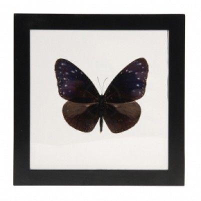 Vlinderkastje met paarse vlinder van &Klevering Amsterdam Kastje van glas met een zwart houten lijstje.