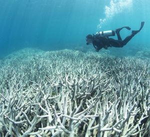 Australie:+hécatombe+de+coraux+sur+la+Grande+barrière