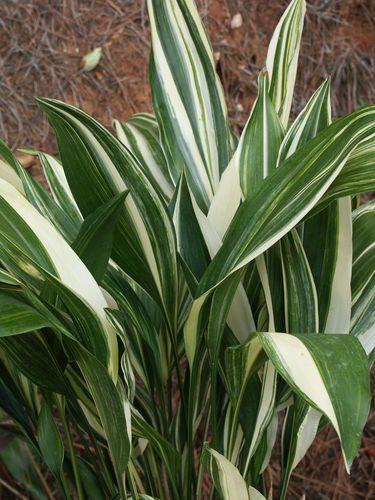 Best 25 Plant Sale Ideas On Pinterest Plant Sale Near Me Free Items And Art Prints For Sale