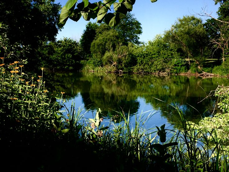 This is a small section of the beautiful North Pond in Lincoln Park, Chicago. One of my favorite places.