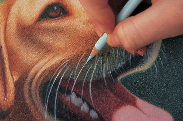 Discover tips from Realistic Pet Portraits in Colored Pencil, which includes demos of easy animals to draw.