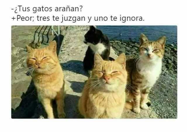 Memes Chistes Humor Funny Invequa Gato Gatos Catmemes Memes En Espanol Memes De Gatos Memes Animal Memes Cute Cat Memes Cat Memes