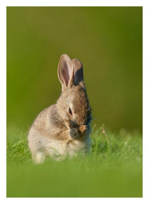 baby rabbit washing