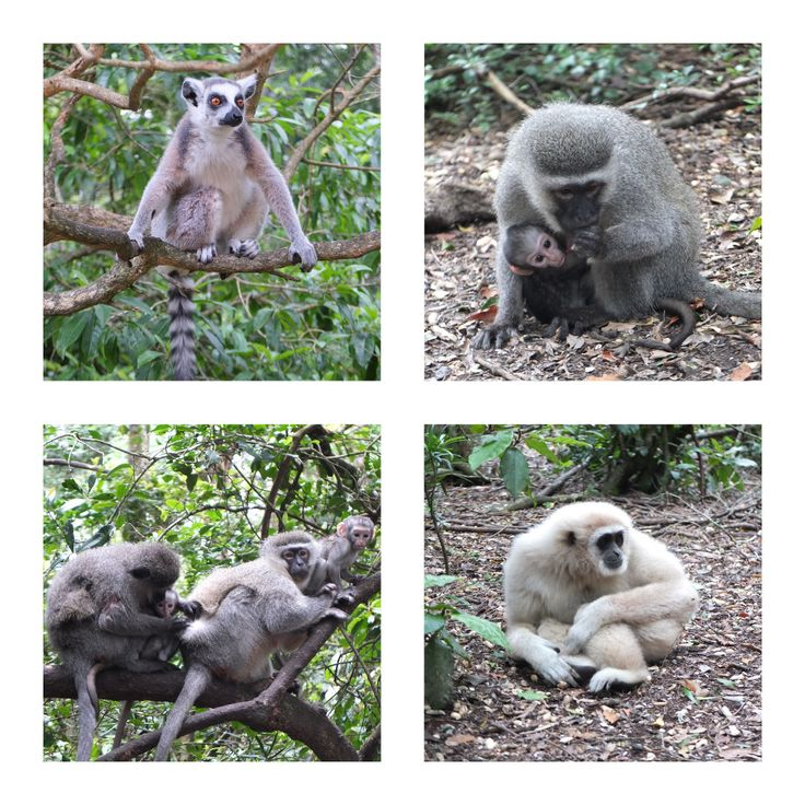 Monkeyland, Plettenberg Bay, South Africa | One Footprint On The World