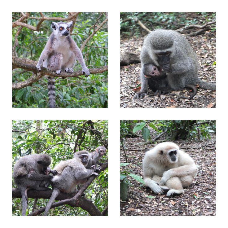 Monkeyland, Plettenberg Bay, South Africa | One Footprint On The World