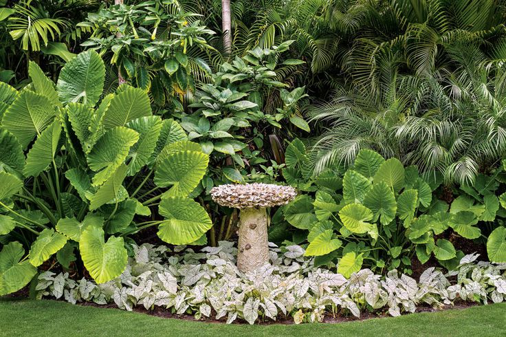 The Birdbath - Magnificent Miami Garden - Southernliving. Framed by palms and elephant's ears, this shell-studded birdbath nestled into a bed of caladiums serves as a focal point.