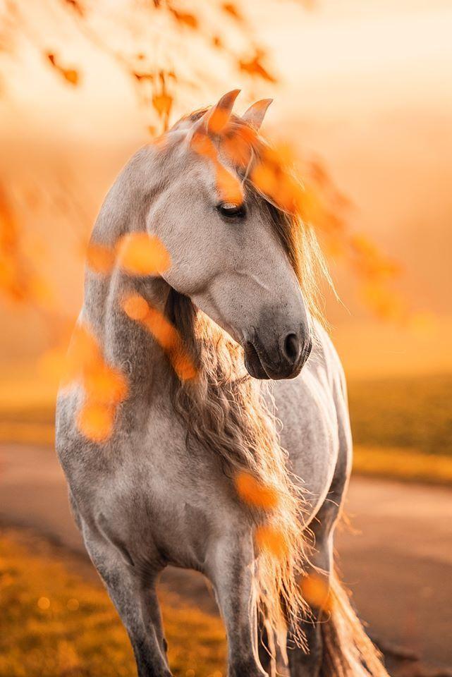 Pre Peluson I B Photographie Beautiful Horses Photography Horses Beautiful Horse Pictures