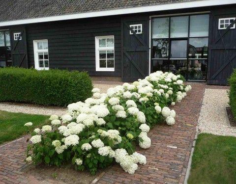 hydrangea 39 annabelle 39 bij landelijk woning outdoor l landelijk pinterest tuin planting. Black Bedroom Furniture Sets. Home Design Ideas