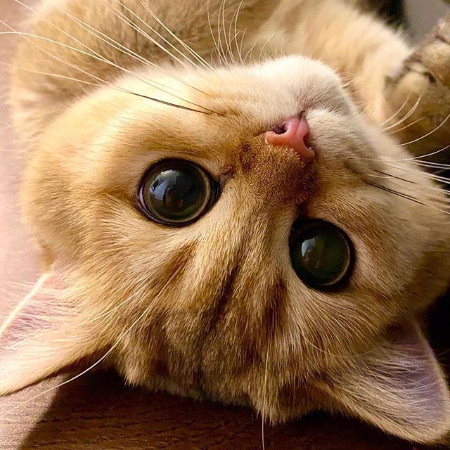 From Lumi Zola Cats Do You Like My Big Eyes Catsofinstagram