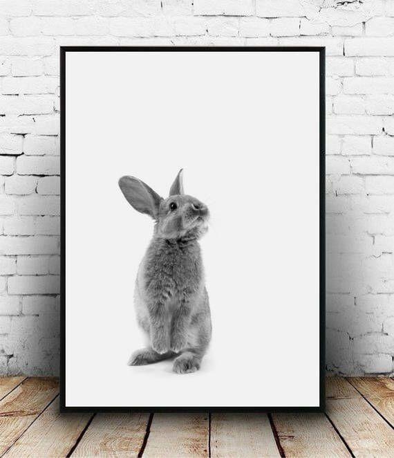 Baby rabbit print Rabbit portrait Woodland bunny print Nursery printable Rabbit photo Nursery wall art animal Nursery decor Rabbit poster by homelyspace on Etsy https://www.etsy.com/au/listing/553165659/baby-rabbit-print-rabbit-portrait
