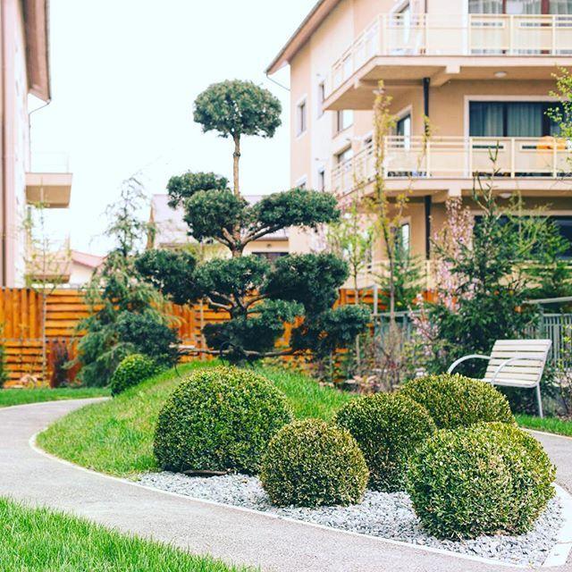 Grădina Sophia Residence, unul din locurile de întâlnire a comunității noastre.