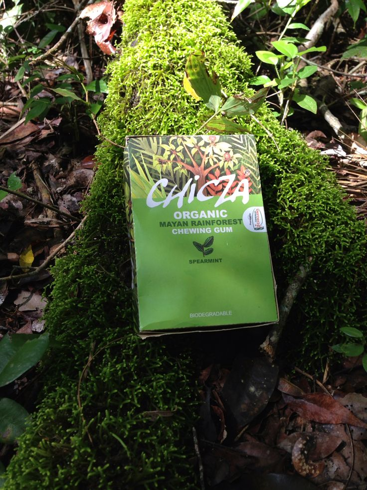 chicza organic chewing gum Chicza preserves the 2nd biggest forest in the world and are able to produce chicza organic chewing-gum autonomously chicza is the real chicle wwwchiczacom.