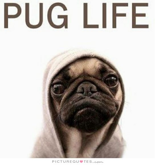 Pug life. Dog quotes on PictureQuotes.com.