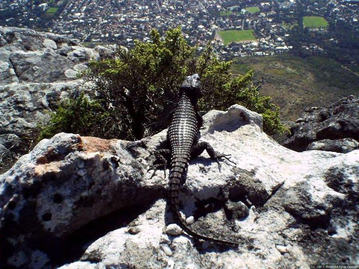 Everyone loves the view from the top of Table Mountain, even Mother Nature herself