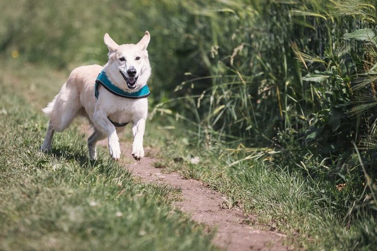 8 Tips To Improve Your Dog's Recall