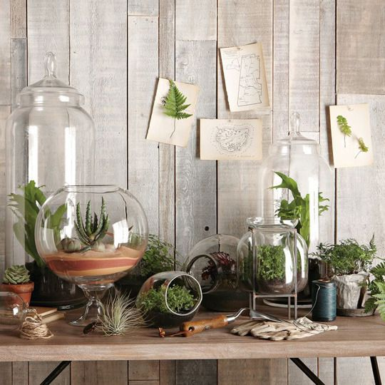 Trendy Terrariums via Apartment Therapy. Click image to see image credits.