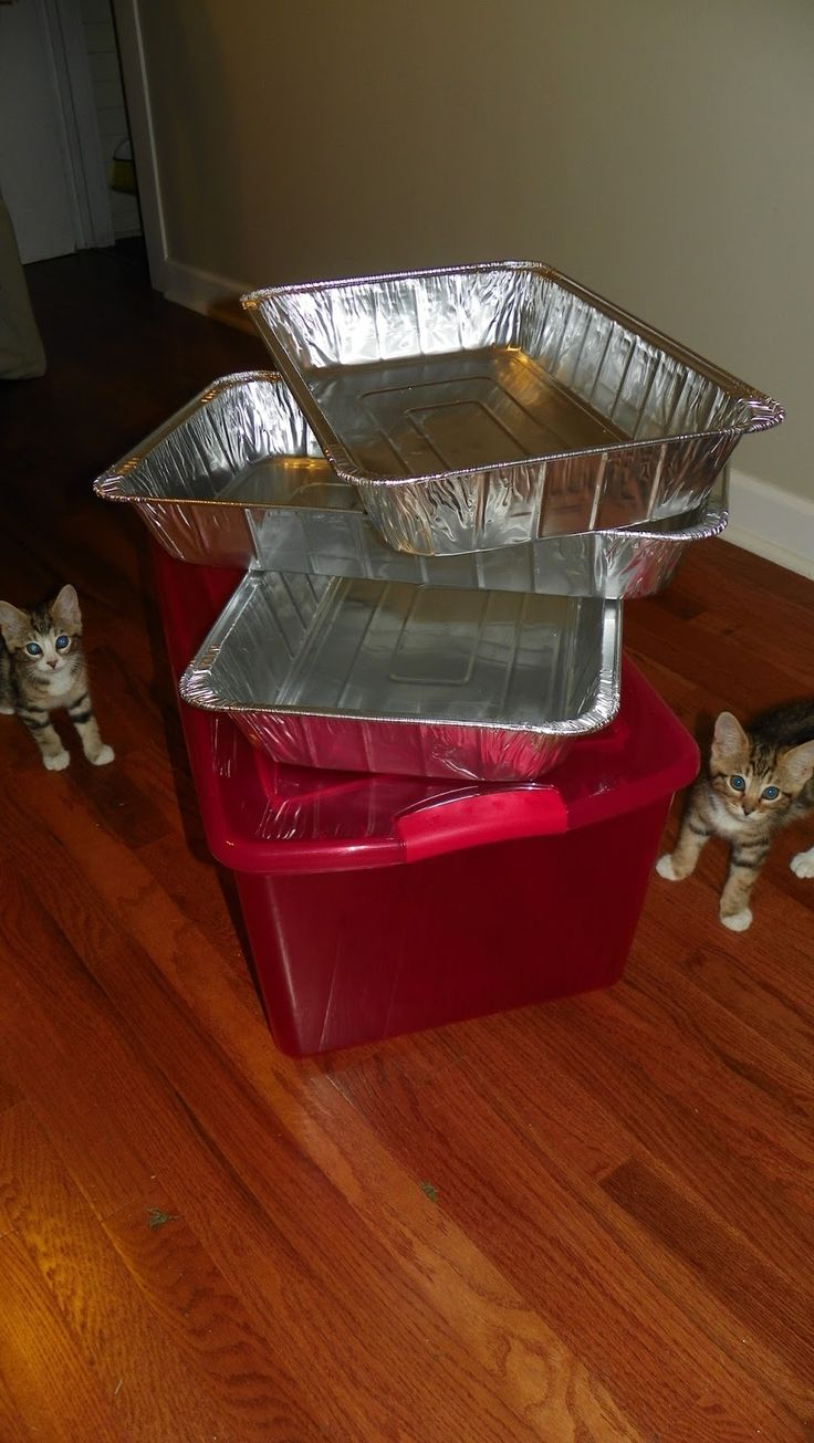 1000 Images About Cat Stuff On Pinterest Cats Cat Litter Boxes And Budget