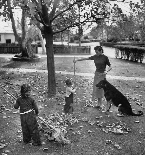 Fall leaves, 1950s Photo by Loomis Dean for LIFE