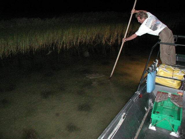 Flounder Gigging No Rod Or Reel Just A Good Gig Please