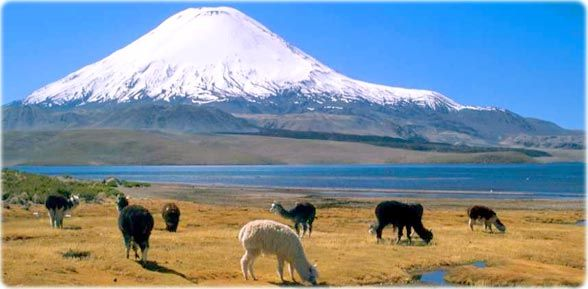 El majestuoso volcán Parinacota, en el altiplano chileno. www.thisisChile.cl