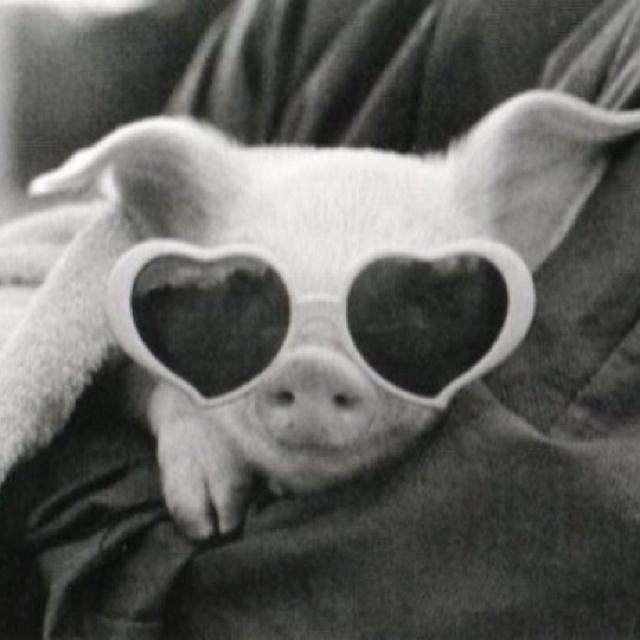 Future pet :)