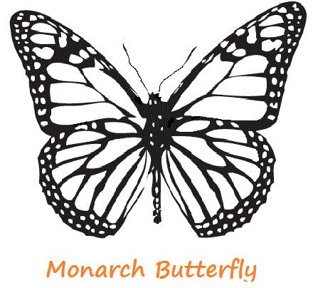 Dibujo Para Colorear Mariposa Monarca Imagesacolorierwebsite