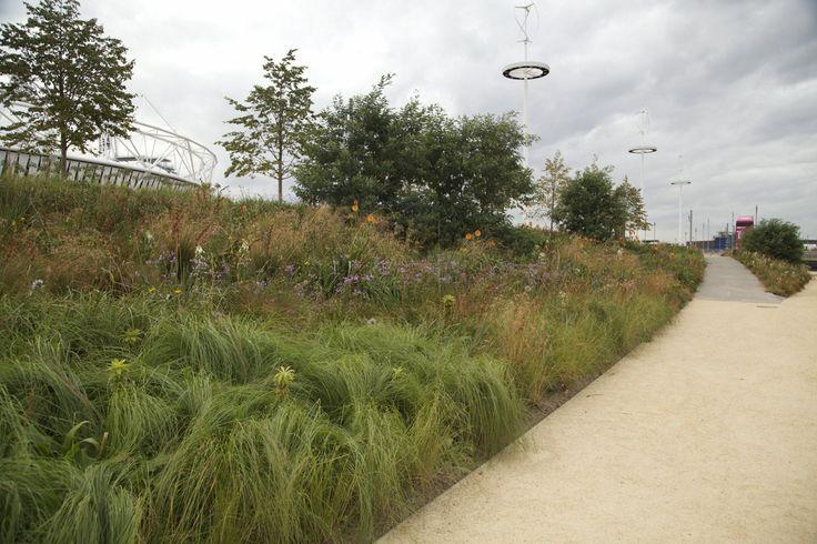 Sarah Price Landscapes   » Olympic Gardens Southern Hemisphere