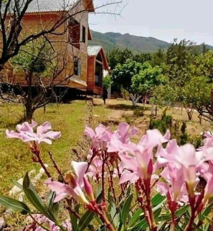 قرية تالين تيبازة الجزائر Beautiful Pictures Plants Pictures