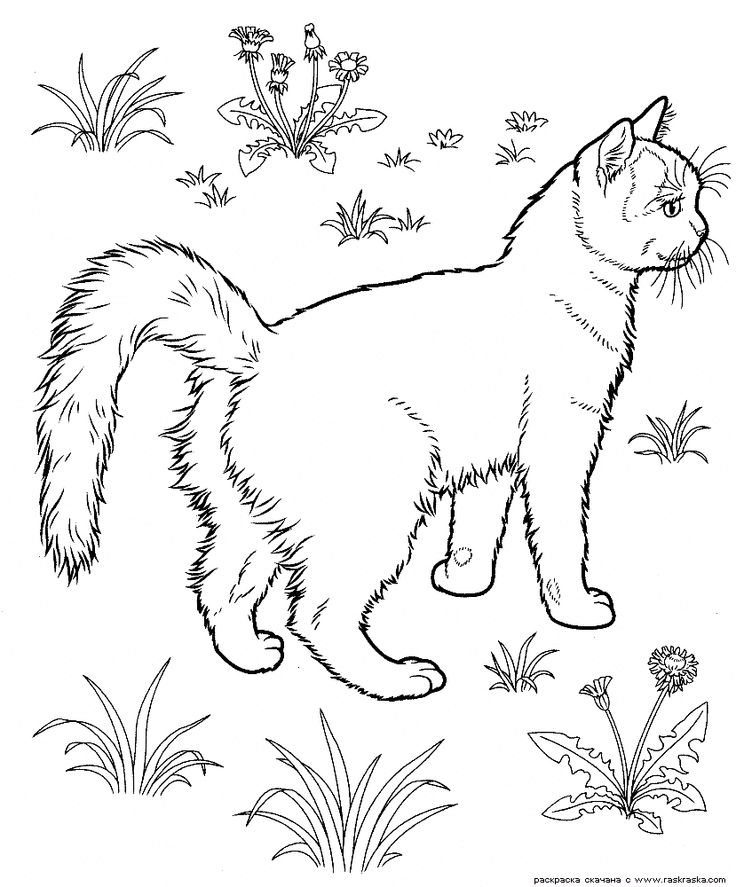 Realistic Cat Coloring Pages For Children Tone