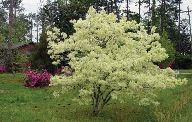Choosing Small Trees for a Big Impact   February 2011 eNewsletter