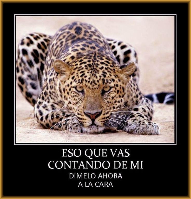 Resultado de imagen de leopardos blancos