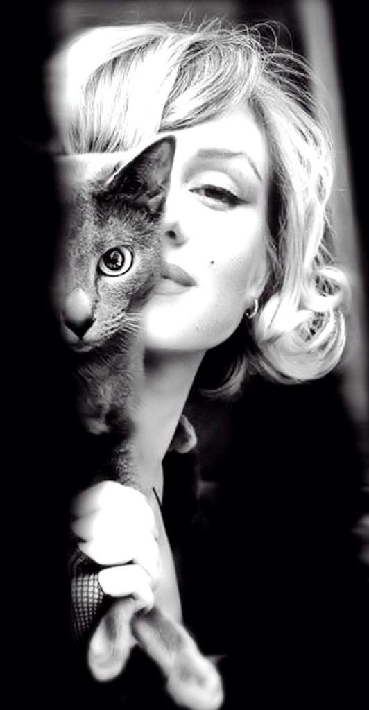 ::::ﷺ♔❥♡ ♤✤❦♡ ✿⊱╮☼ ☾ PINTEREST.COM christiancross ☀ قطـﮧ‌‍ ⁂ ⦿ ⥾ ❤❥◐ •♥•*⦿[†] ::::Marilyn and her Cat - what a beautiful pic! <3