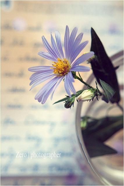 Em được ví như loài hoa Thạch Thảo  Vẫn nép mình dưới đám cỏ xung quanh  Em nhỏ nhắn, nở xinh giữa mùa thu buồn bã  Tím một màu, ẩn chứa nỗi cô đơn.    Em bảo rằng: yêu em anh sẽ khổ !?  Xa em rồi anh sẽ hạnh phúc thôi anh !?  Và em sẽ không bao giờ yêu ai  http://phongthuyvadoisong.com/  http://phongthuyvadoisong.com/435/San-Pham/da-thach-anh-tim-amethyst.htm