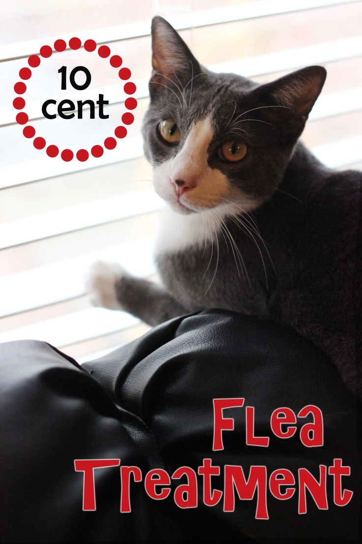 Flea treatment on a dime. Literally! Cheap Flea Treatment for Cats using two drops of Young Living essential oil