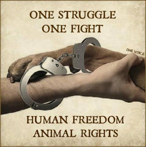 Quand toutes les associations du monde défendant et militant à la fois pour les droits des animaux/les droits de l'homme s'uniront et travailleront ensemble pour œuvrer à rendre un semblant d'humanité.Car elles doivent se rendre à l'évidence qu' il s'agit de la même cause,du même combat....