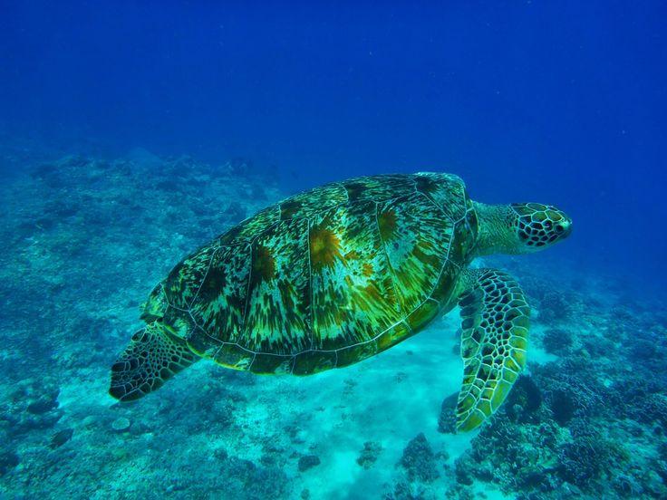 Bali Tauchen: Bali ist für Taucher eine beliebte Destination. Erfahre hier 5 besondere Orte für Taucher auf Bali. Happy Diving!