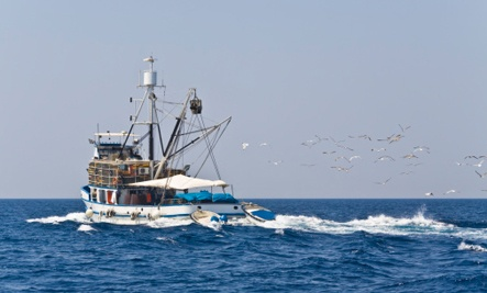 17 best images about deep sea fishing on pinterest for Groupon deep sea fishing
