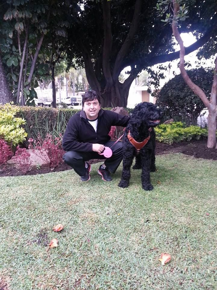 Mickaela Terrier ruso negro,  Black Russian Terrier  in garden.